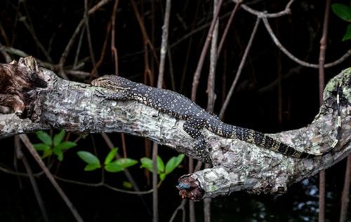Sri Lankas nationalparker bjuder på ett rikt djurliv.