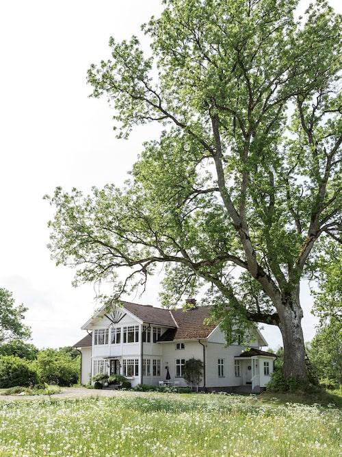 Sommarängen når nästan ända fram till huset som ligger inbäddat i grönska.
