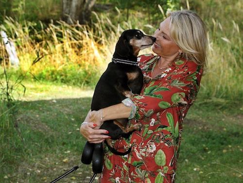 Helena får mycket kärlek från sina många djur. Här syns taxen Elvis.