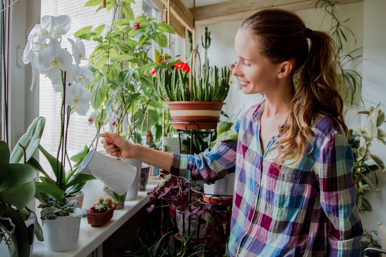 allergiframkallande växter inomhus