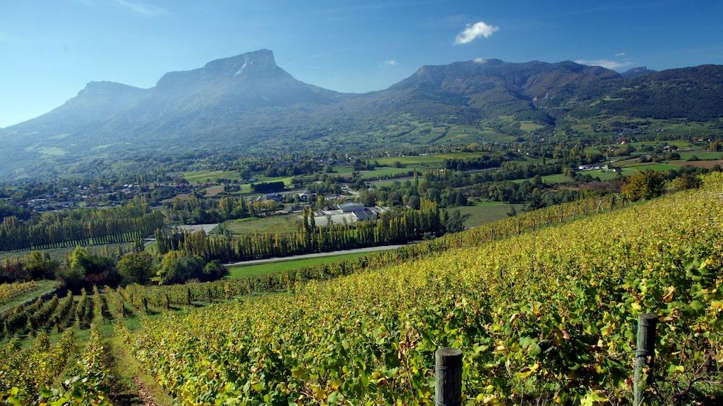 Franska Jura bjuder på stora vinupplevelser.