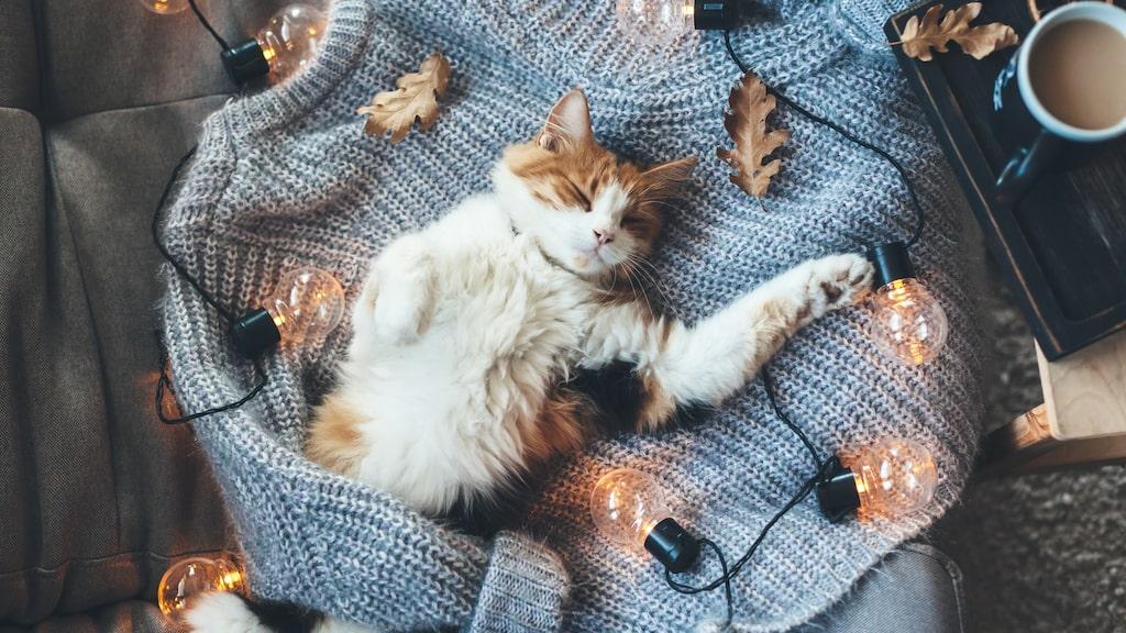Kaféet ska heta The Cat Corner och rymma nio hemlösa katter. Meningen är att sprida information om kattadoption.