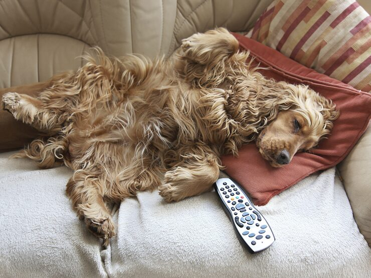 En hunds päls är en stor källa till lukten i en hundägares hem.