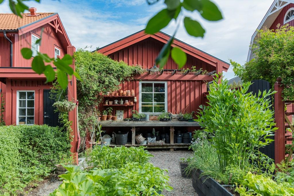 Trädgården består av flera rum. Här bakom trädgårdsboden har Kajsa en ordentlig arbetsbänk och odlingslådor. I pergolan slingrar sig vinrankor, klematis och björnbär.