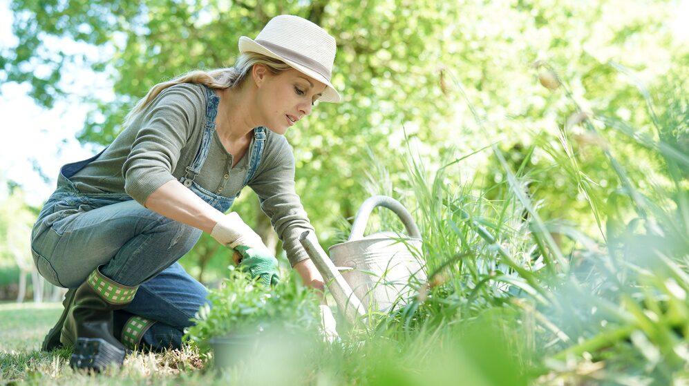 Att pyssla i trädgården kan höja vårt humör och minska stress och ångest.