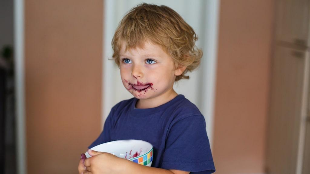 Att plocka blåbär är en utmärkt familjeaktivitet, även om barnen kanske föredrar själva ätandet...