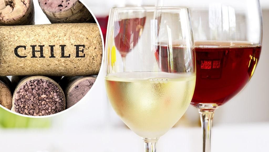 Allt om Vins vinprovare Gunilla Hultgren Karel tipsar om fina fyndviner från Chile under hundralappen.