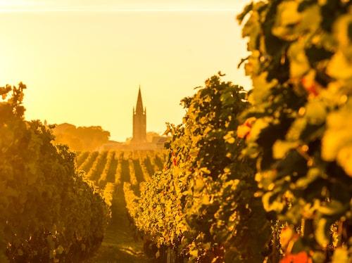 90 procent av alla viner som tillverkas i Bordeaux är röda.