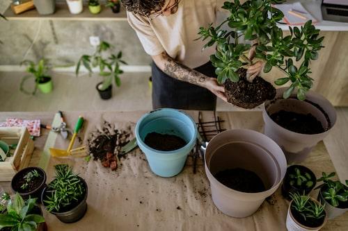 Ibland är omplantering en lösning för ledsna krukväxter.