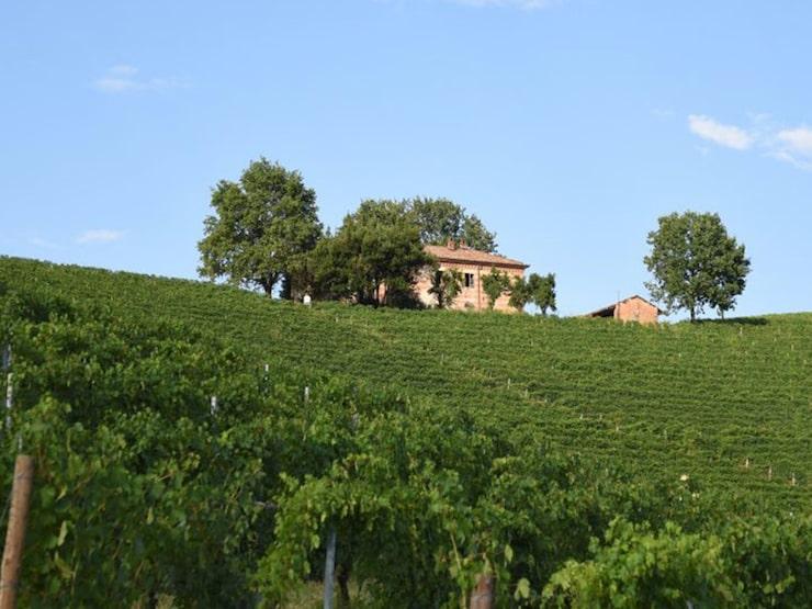 Fontanafredda i Piemonte odlar bland annat druvorna nebbiolo och barbera.
