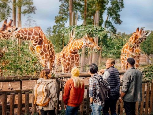 På Kolmården finns djur från hela världen.