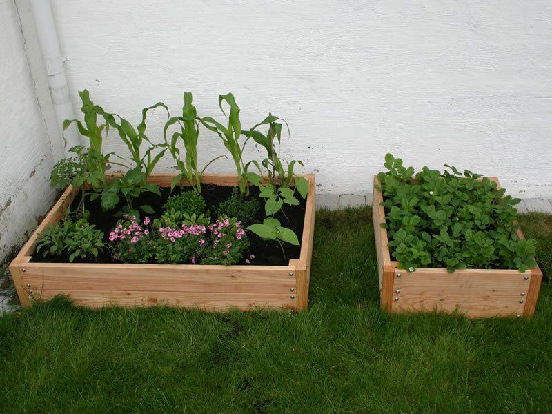 En odlingslåda i lärkträ garanterar lång hållbarhet, och innehåller inga impregneringsmedel, vilket gör den utmärkt för odling av köksväxter. Willab Gardens odlingslåda finns i två storlekar. Det finns även en påbyggnadsdel.