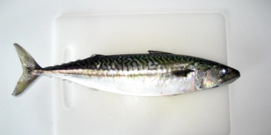 Fet fisk som makrill innehåller D-vitamin.