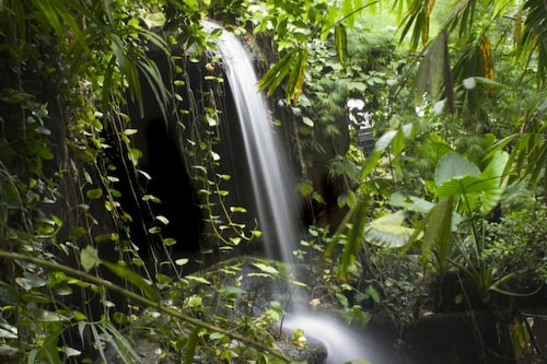 Regnskogen i Amazonas.