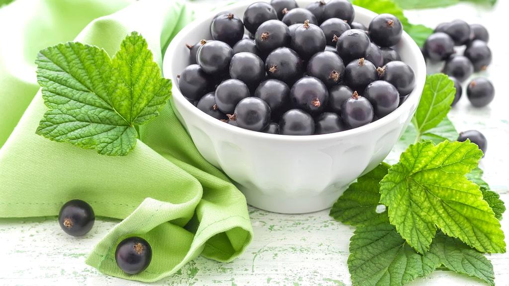 Blåbär och andra bär en vanlig doft- och smakförnimmelse när det gäller vin.