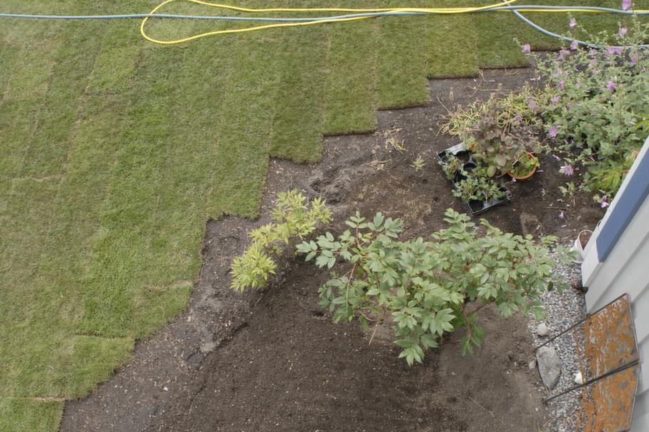 STEG 8. Kantbeskär allra sist.<br>Ta all extra kantbeskärning sist. Det är tuffarna än man tror att skära av mattan. Restbitarna kan du använda och fylla ut vid rabattkanter till exempel. Tänk också på att gräsmattan kommer att växa mera i ytterkanterna, där jorden oftast är lösare. Med tiden drar sig gräsmattan in i rabatterna. Spara ut en rejäl marginal så slipper du kantskära första året.