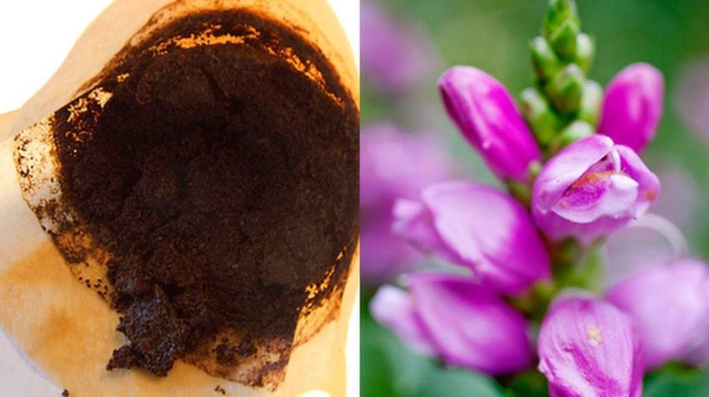 Kaffesump gör dina växter superglada. Som bonus kan de avskräcka insekter och skadedjur.