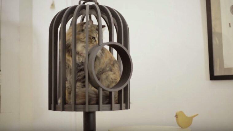 Fågelbur fast för katter. Lugn, det finns ett hål att krypa ut och in för katten.