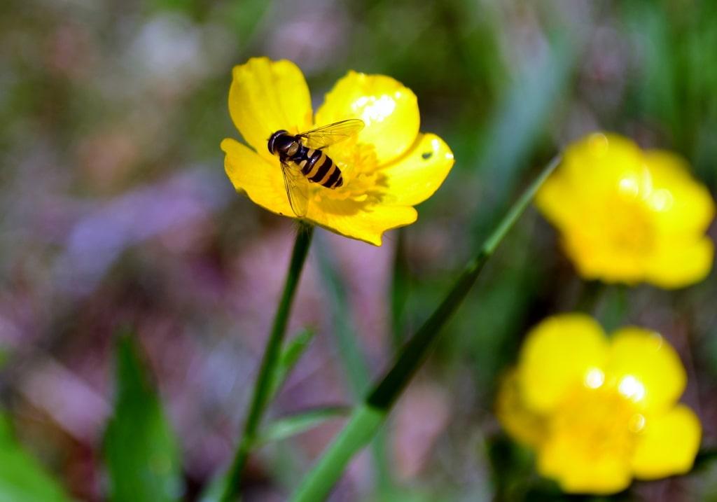 Getingar är bra för naturen då de sköter om dess kretslopp.