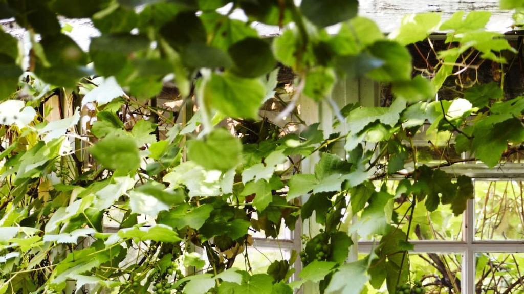 Kaféstolarna Sofie finns i flera färger, av rotting, cirka 2 000 kronor, Sika design.