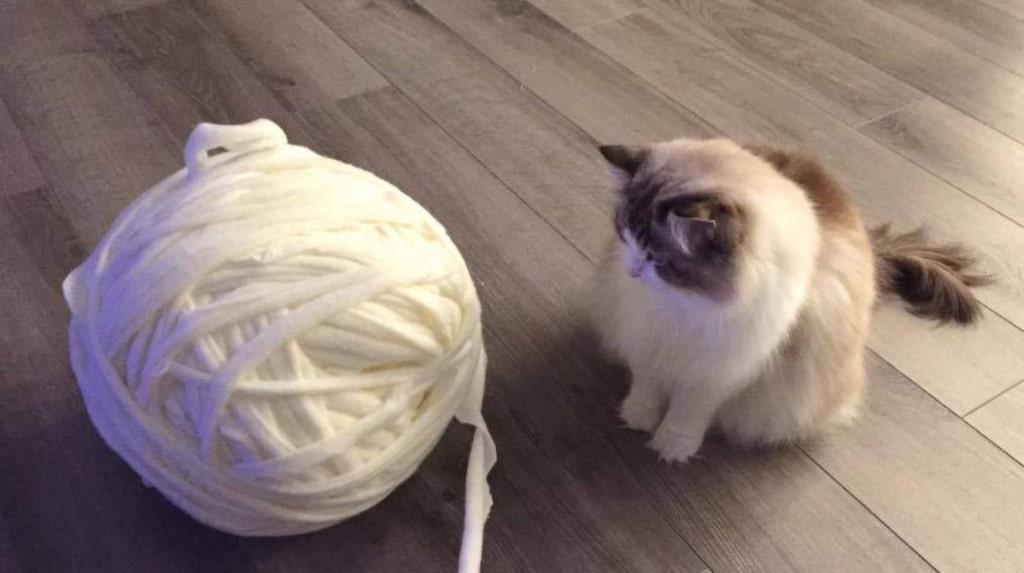 Katten var intresserad av fleecefilten som förvandlats till ett garnnystan.