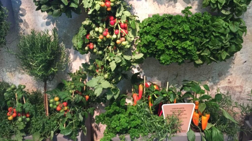 """Det är hett med """"stadsodling"""" – att odla det du vill äta, själv hemma. Egen köksträdgård står på mångas önskelista, men att odla grönsaker och kryddor i amplar, på fönsterbänken och i krukor på balkongen räcker ganska långt."""
